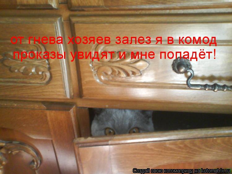 Котоматрица: от гнева хозяев залез я в комод проказы увидят и мне попадёт!