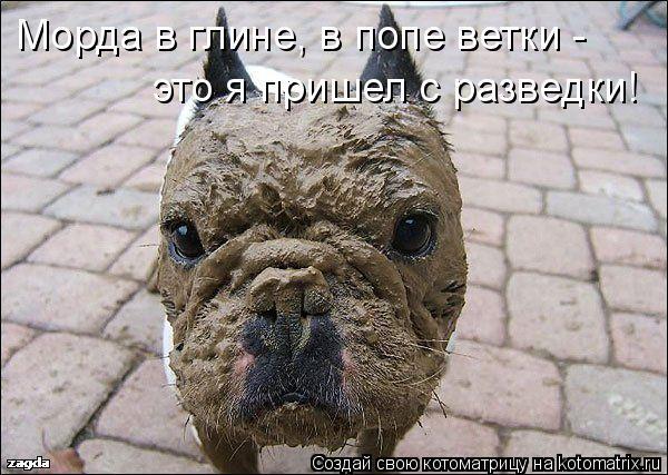 Котоматрица: Морда в глине, в попе ветки -  это я пришел с разведки!