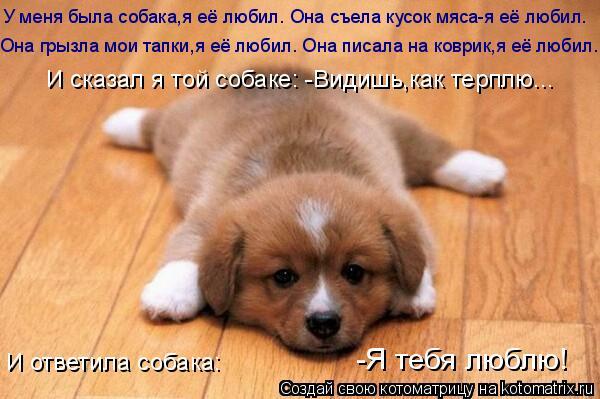 Котоматрица: У меня была собака,я её любил. Она съела кусок мяса-я её любил. Она грызла мои тапки,я её любил. Она писала на коврик,я её любил. И сказал я той