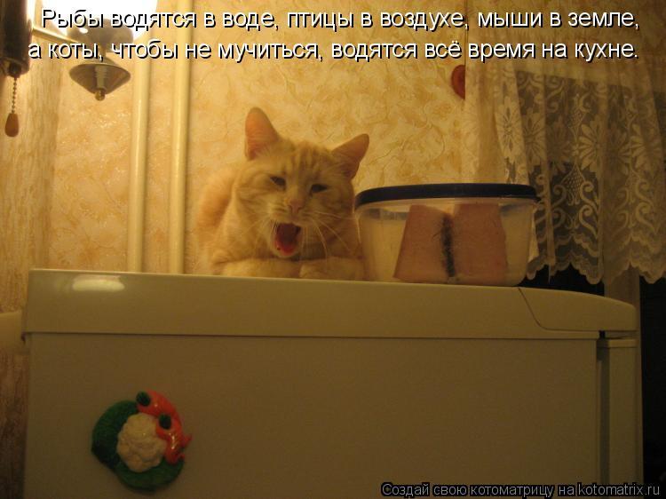 Котоматрица: Рыбы водятся в воде, птицы в воздухе, мыши в земле,  а коты, чтобы не мучиться, водятся всё время на кухне.