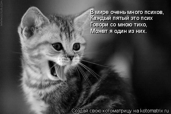 Котоматрица: В мире очень много психов, Каждый пятый это псих Говори со мною тихо, Может я один из них…