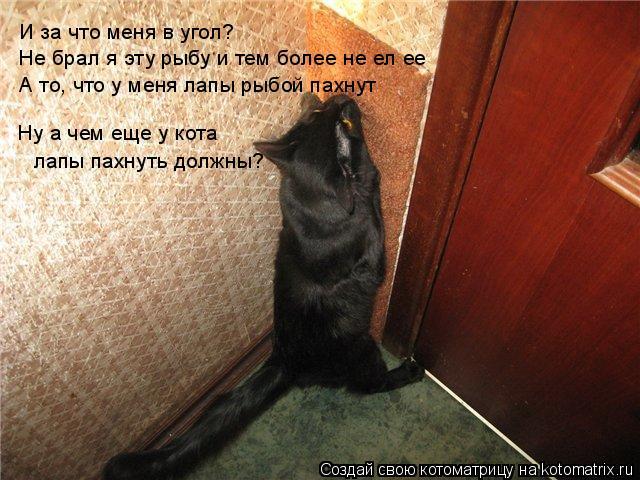 Котоматрица: И за что меня в угол? Не брал я эту рыбу и тем более не ел ее А то, что у меня лапы рыбой пахнут Ну а чем еще у кота лапы пахнуть должны?