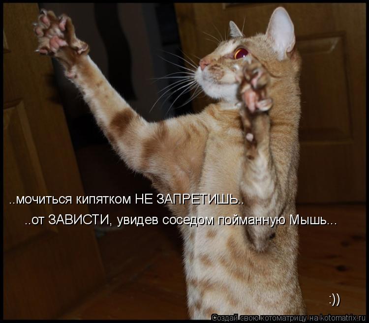 Котоматрица: ..мочиться кипятком НЕ ЗАПРЕТИШЬ.. ..от ЗАВИСТИ, увидев соседом пойманную Мышь... :))
