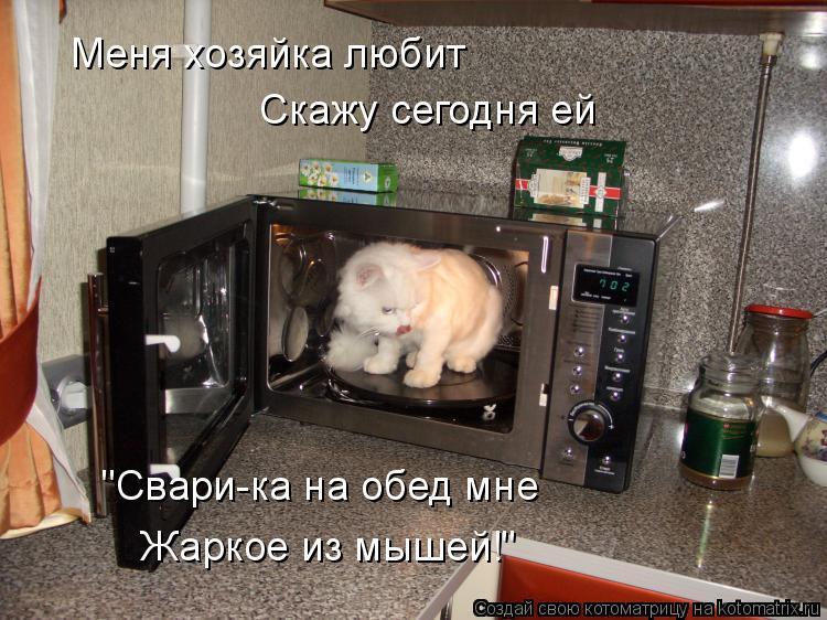 """Котоматрица: Меня хозяйка любит Скажу сегодня ей """"Свари-ка на обед мне Жаркое из мышей!"""""""