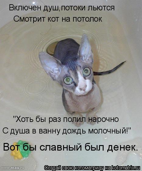 """Котоматрица: Включен душ,потоки льются Смотрит кот на потолок """"Хоть бы раз полил нарочно С душа в ванну дождь молочный!"""" Вот бы славный был денек."""