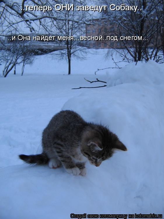 Котоматрица: ..теперь ОНИ заведут Собаку.. ..и Она найдет меня...весной..под снегом...