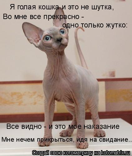 Котоматрица: Я голая кошка и это не шутка, Во мне все прекрасно -  одно только жутко: Все видно - и это мое наказание Мне нечем прикрыться, идя на свидание...