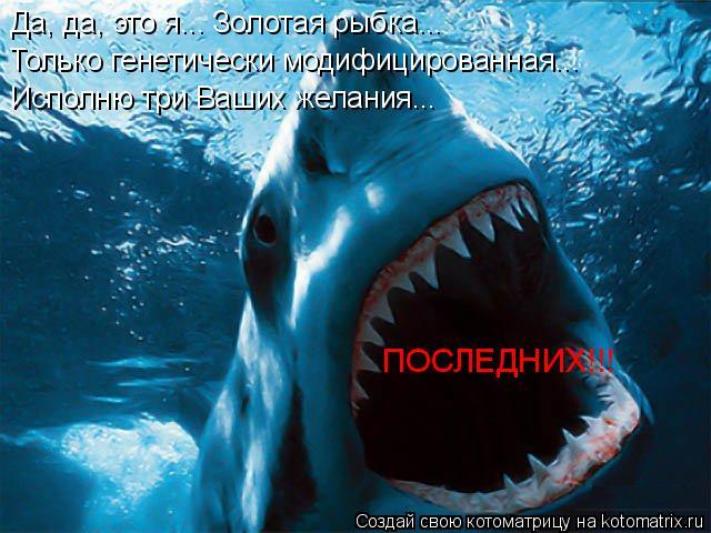 Котоматрица: Да, да, это я... Золотая рыбка... Только генетически модифицированная... ПОСЛЕДНИХ!!! Исполню три Ваших желания...