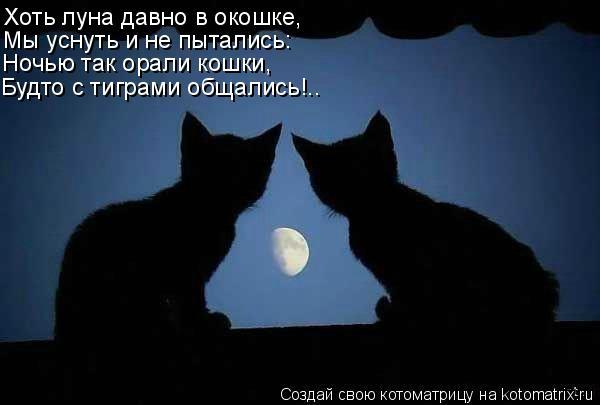 Котоматрица: Хоть луна давно в окошке, Мы уснуть и не пытались: Ночью так орали кошки, Будто с тиграми общались!..