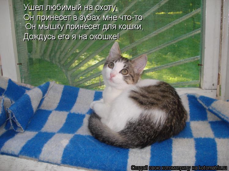 Котоматрица: Ушел любимый на охоту Он принесет в зубах мне что-то  Он мышку принесет для кошки,  Дождусь его я на окошке!