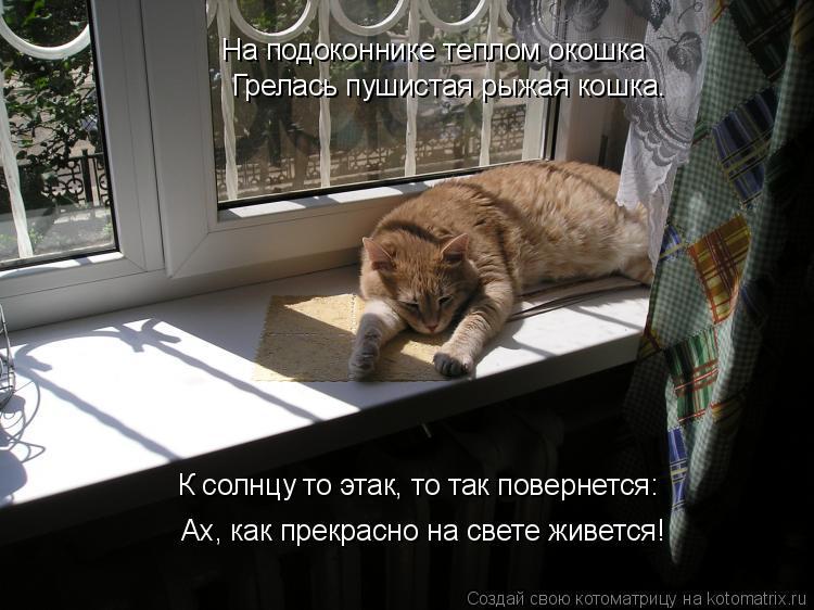 Котоматрица: На подоконнике теплом окошка Грелась пушистая рыжая кошка. К солнцу то этак, то так повернется: Ах, как прекрасно на свете живется!