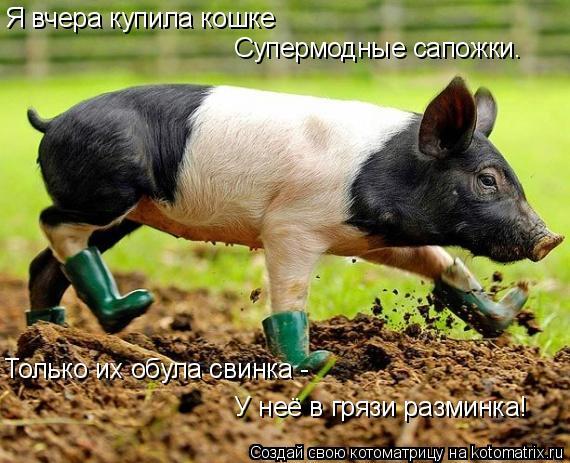 Котоматрица: Я вчера купила кошке Супермодные сапожки. Только их обула свинка - У неё в грязи разминка!