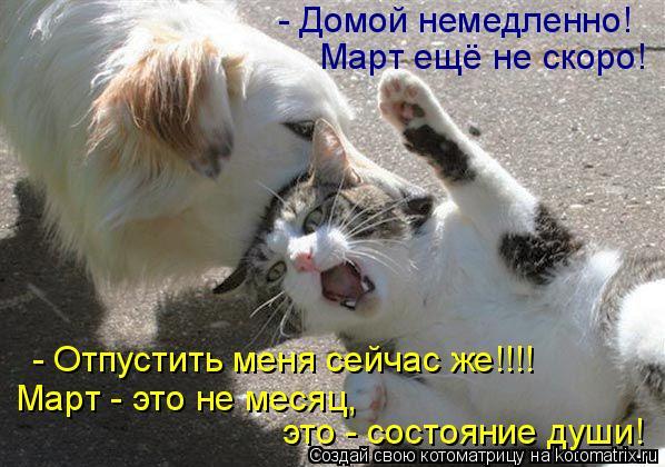 Котоматрица: - Отпустить меня сейчас же!!!! - Домой немедленно!  Март ещё не скоро! Март - это не месяц,  это - состояние души!