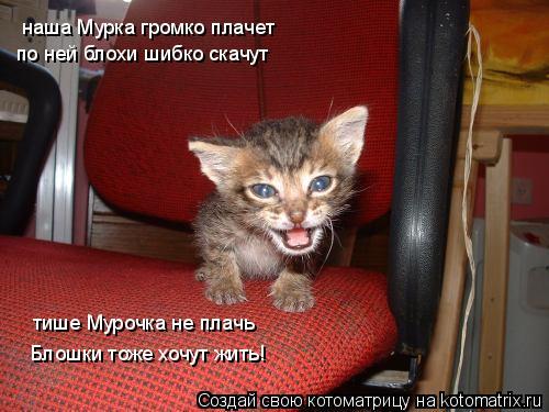 Котоматрица: наша Мурка громко плачет по ней блохи шибко скачут тише Мурочка не плачь Блошки тоже хочут жить!