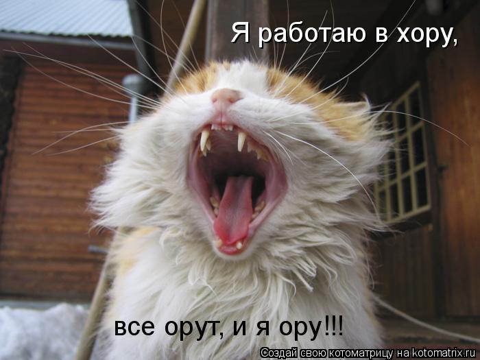 Котоматрица: Я работаю в хору, все орут, и я ору!!!