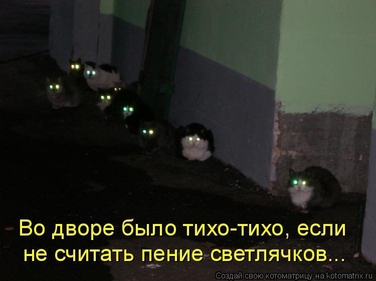 Котоматрица: Во дворе было тихо-тихо, если  не считать пение светлячков...