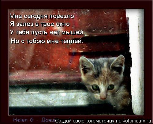 Котоматрица: Мне сегодня повезло Я залез в твое окно У тебя пусть нет мышей, Но с тобою мне теплей…