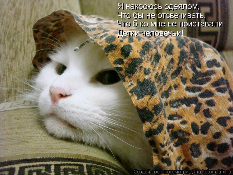 Котоматрица: Я накроюсь одеялом, Что бы не отсвечивать, Что б ко мне не приставали Детки человечьи!