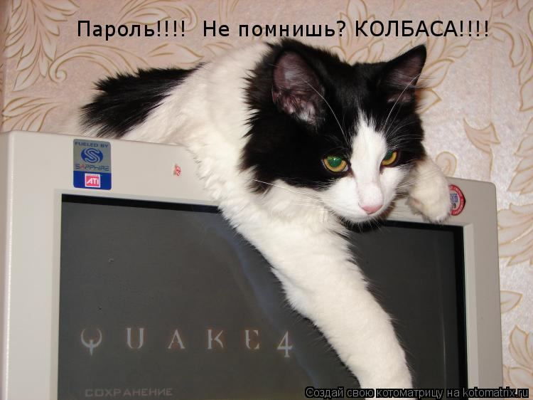 Котоматрица: Пароль!!!!  Не помнишь? КОЛБАСА!!!!