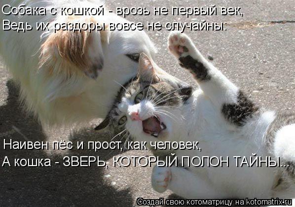 Котоматрица: Собака с кошкой - врозь не первый век, Ведь их раздоры вовсе не случайны: Наивен пёс и прост, как человек, А кошка - ЗВЕРЬ, КОТОРЫЙ ПОЛОН ТАЙНЫ..