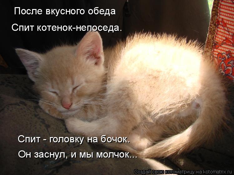 Котоматрица: После вкусного обеда Спит котенок-непоседа. Спит - головку на бочок. Он заснул, и мы молчок...
