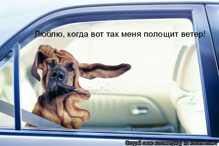 Котоматрица: Люблю, когда вот так меня полощит ветер!
