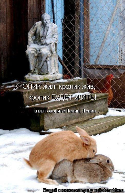 Котоматрица: КРОЛИК жил, кролик жив,  кролик БУДЕТ ЖИТЬ! а вы говорите Ленин, Ленин...