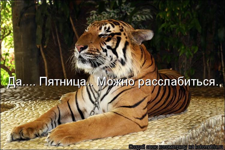 Открытка ты мой тигр 97