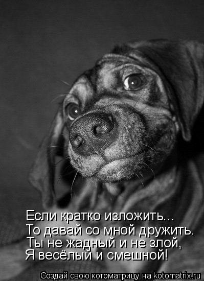 Котоматрица: Если кратко изложить... То давай со мной дружить. Ты не жадный и не злой, Я весёлый и смешной!