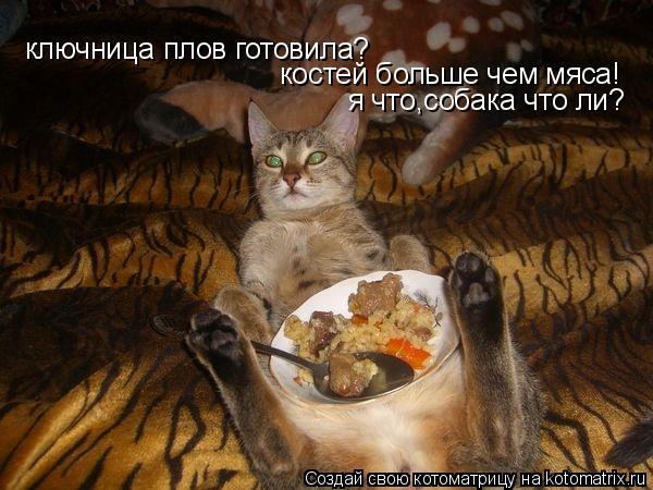 Котоматрица: ключница плов готовила? костей больше чем мяса! я что,собака что ли?