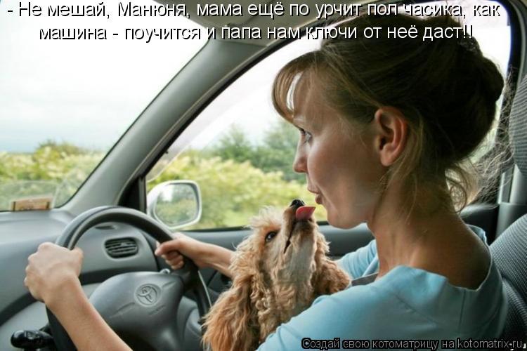 Котоматрица: - Не мешай, Манюня, мама ещё по урчит пол часика, как машина - поучится и папа нам ключи от неё даст!!