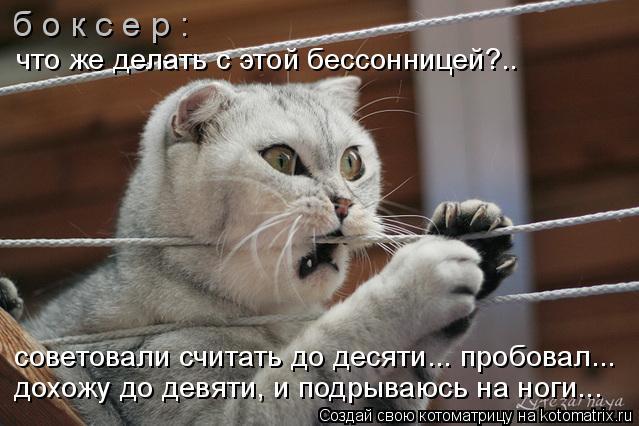 Котоматрица: б о к с е р : что же делать с этой бессонницей?.. советовали считать до десяти... пробовал... дохожу до девяти, и подрываюсь на ноги...