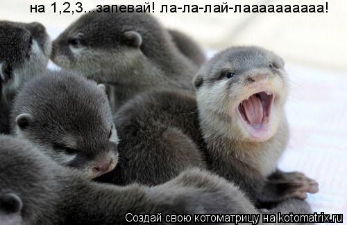 Котоматрица: на 1,2,3...запевай! ла-ла-лай-лаааааааааа!