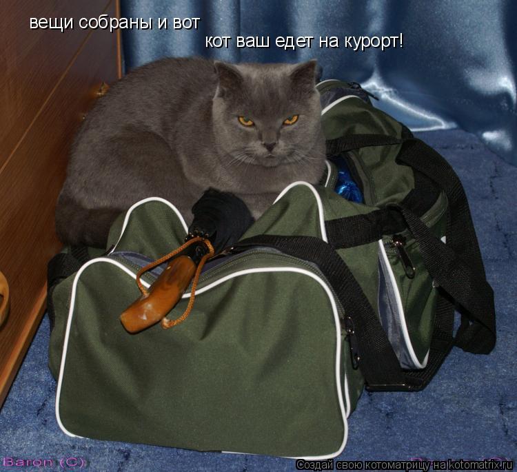 Котоматрица: вещи собраны и вот кот ваш едет на курорт!