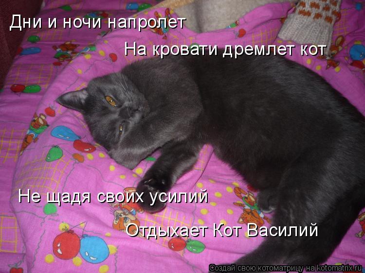 Котоматрица: Дни и ночи напролет На кровати дремлет кот Не щадя своих усилий Отдыхает Кот Василий