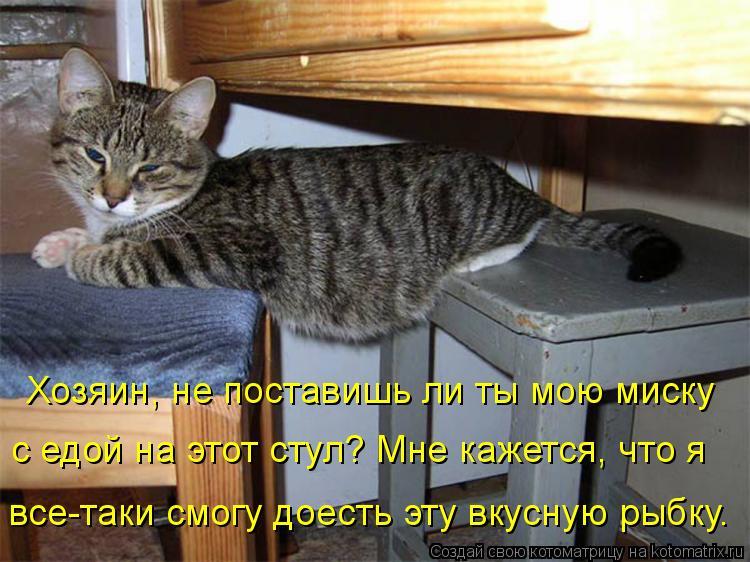 Котоматрица: Хозяин, не поставишь ли ты мою миску  с едой на этот стул? Мне кажется, что я  все-таки смогу доесть эту вкусную рыбку.