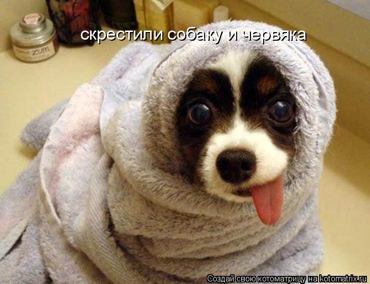 Котоматрица: скрестили собаку и червяка