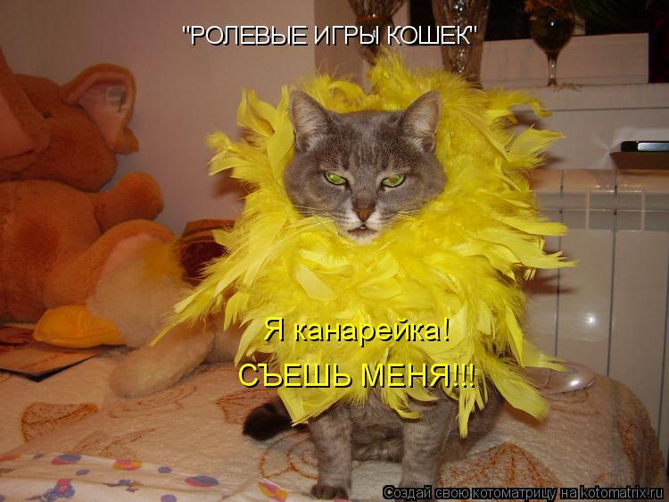 """Котоматрица: """"РОЛЕВЫЕ ИГРЫ КОШЕК"""" Я канарейка! СЪЕШЬ МЕНЯ!!!"""