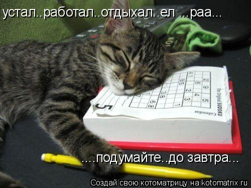 Котоматрица: устал..работал..отдыхал..ел ...раа... ....подумайте..до завтра...