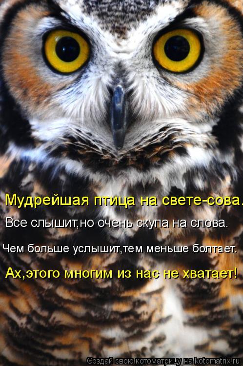 Котоматрица: Мудрейшая птица на свете-сова. Все слышит,но очень скупа на слова. Чем больше услышит,тем меньше болтает. Ах,этого многим из нас не хватает!