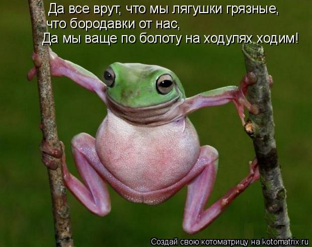 Котоматрица: Да все врут, что мы лягушки грязные,  что бородавки от нас, Да мы ваще по болоту на ходулях ходим!
