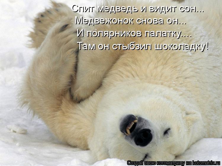 Котоматрица: Спит медведь и видит сон... Медвежонок снова он... И полярников палатку.... Там он стыбзил шоколадку!