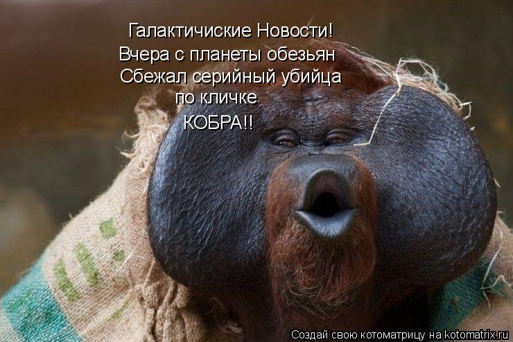 Котоматрица: Галактичиские Новости! Вчера с планеты обезьян Сбежал серийный убийца по кличке  КОБРА!!
