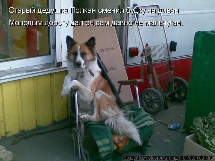 Котоматрица: Старый дедушка Полкан сменил будку на диван Молодым дорогу дал он,сам давно не мальчуган.