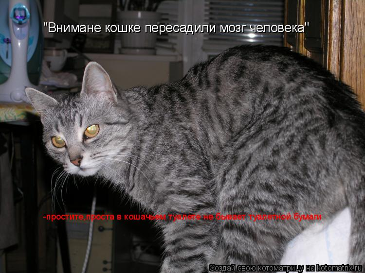 """Котоматрица: """"Внимане кошке пересадили мозг человека"""" -простите,проста в кошачьем туалете не бывает туалетной бумаги"""