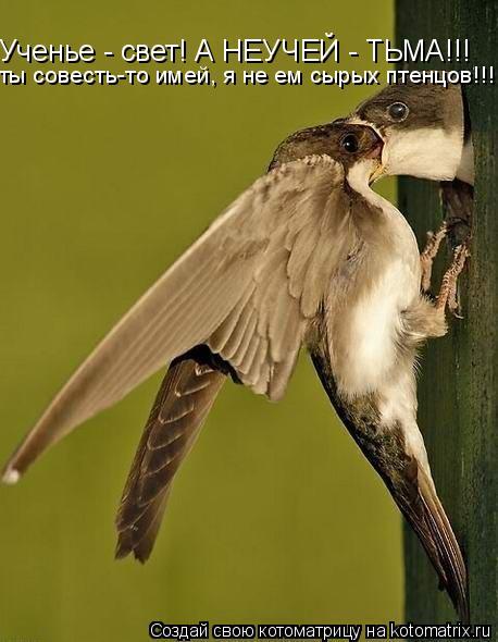 Котоматрица: Ученье - свет! А НЕУЧЕЙ - ТЬМА!!! ты совесть-то имей, я не ем сырых птенцов!!!