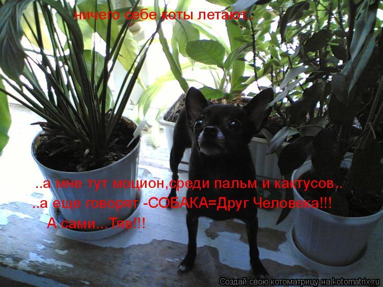 Котоматрица: ничего себе коты летают.. ..а мне тут моцион,среди пальм и кактусов.. ..а еще говорят -СОБАКА=Друг Человека!!! А сами...Тяв!!!
