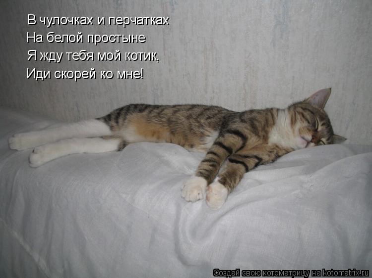Котоматрица: В чулочках и перчатках На белой простыне Я жду тебя мой котик, Иди скорей ко мне!
