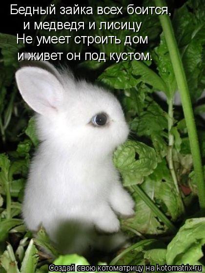 смайлик зайка: