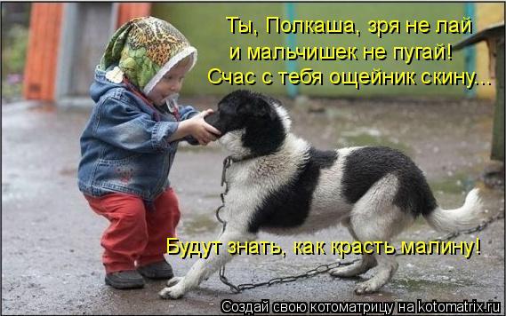 Котоматрица: Ты, Полкаша, зря не лай и мальчишек не пугай! Счас с тебя ощейник скину... Будут знать, как красть малину!